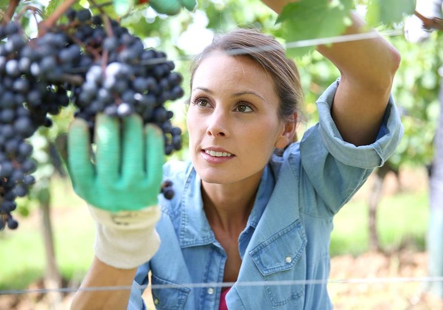 Low FODMAP Fruits - Grapes