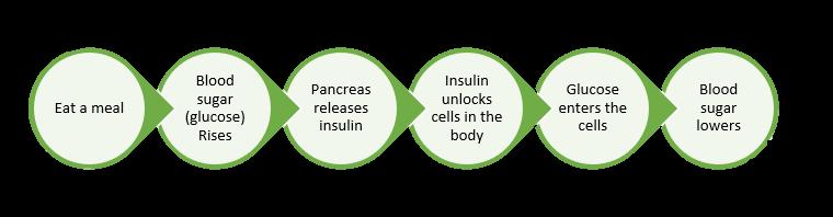 Prediabetes: normal insulin process